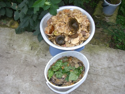 экологическое питание здоровое питание